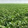 Nebraska signs agreement to use state's soybeans in Bulgaria
