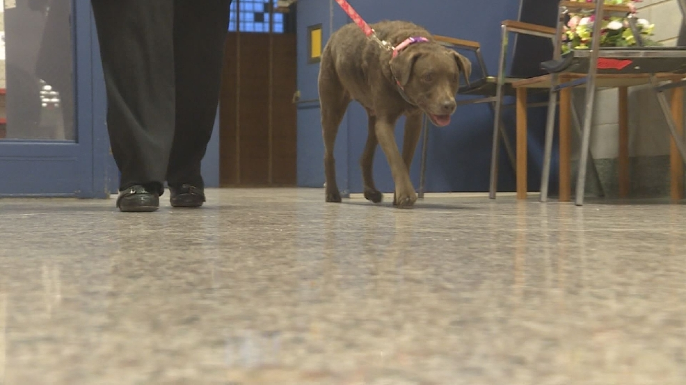 Niles School Board approves therapy dog for the high school