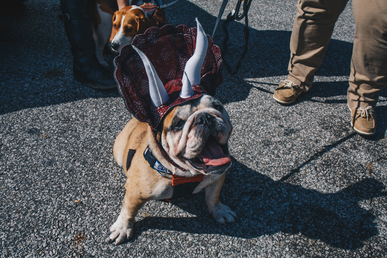 Jack in his Halloween costume at the Howl-o-Ween in the Woods at the Caldwell Nature Preserve (10.21.18) / Image: Catherine Viox // Published: 10.31.18