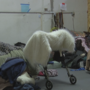 Homeless people may be forced to temporarily leave Camp Hope every few months