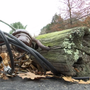 Downed utility pole causing problems for Lincoln resident