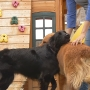 New bill may cause legal trouble for pet stores