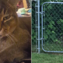 Cougar spotted in Battle Ground, Washington turned out to be large house cat