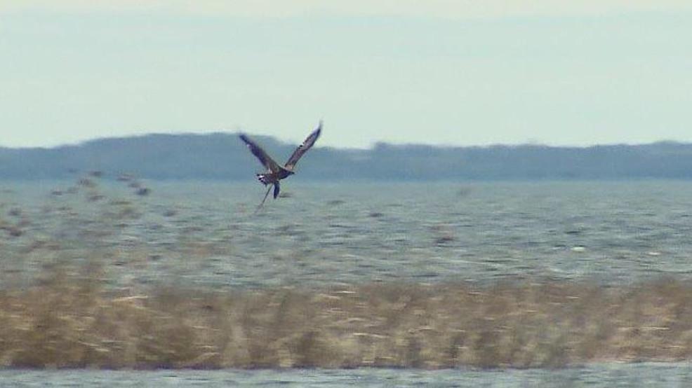 Eagle nest in oconto wluk for Oconto fishing report