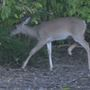 Barry, Illinois outfitter receives 50 citations & warnings for illegal deer hunting