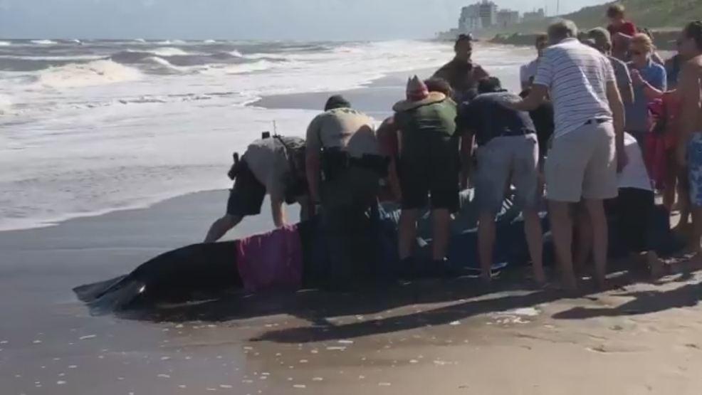 Stranded whale reported near juno beach pier wpec for Juno pier fishing report