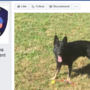 Miami police taps public to help name their new K9 officer