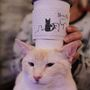 Nashville is getting its very own cat coffee house, 'Mewsic Kitty Cafe'