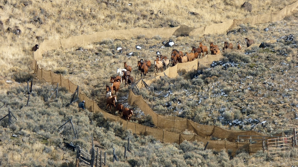 Horse Spaying Backlas_Furm.jpg