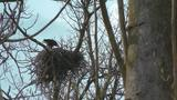 Eagles' nest captures awe of Columbus