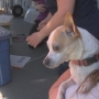 Yakima Humane Society provides medical treatment to pets at homeless camp