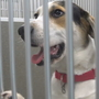 Shelter stresses transparency in adopting dogs