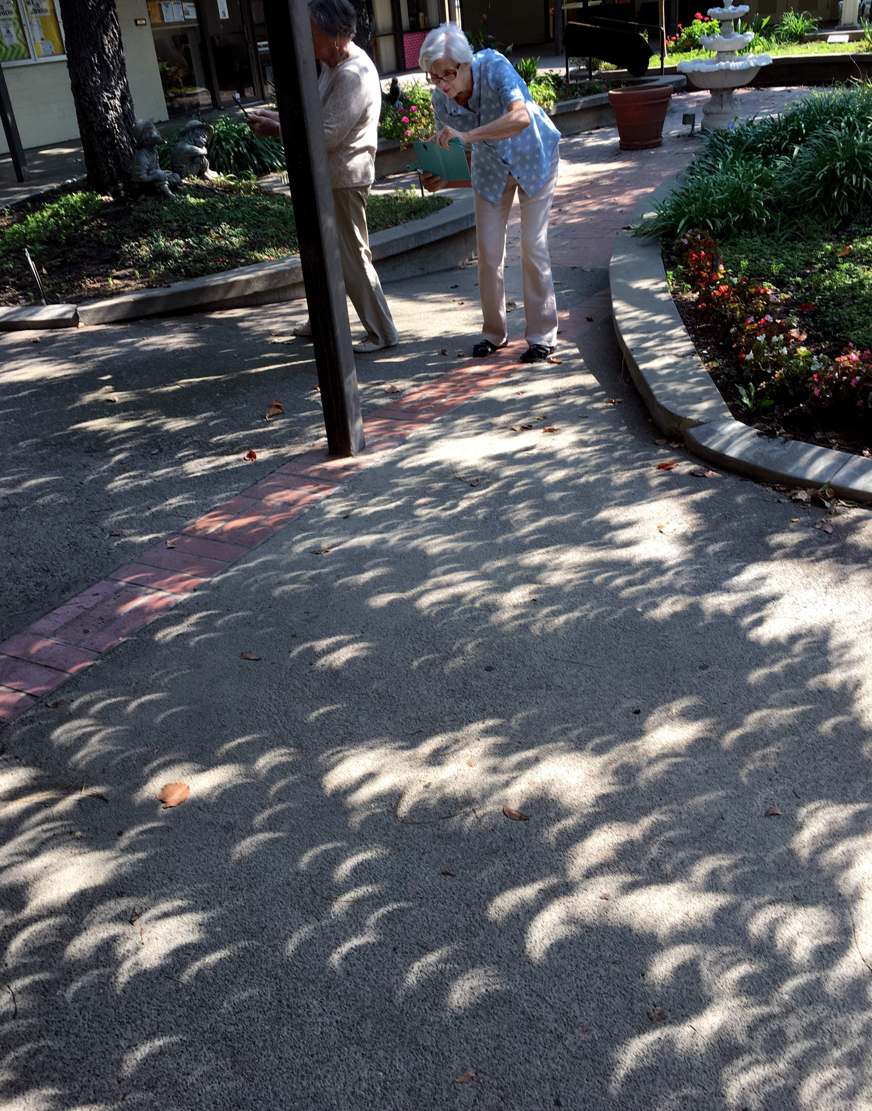 Janine Ford takes time out from her art class at Oak Park senior center to photograph the eclipse shadows on the garden walkway. [CALIXTRO ROMIAS/THE RECORD]