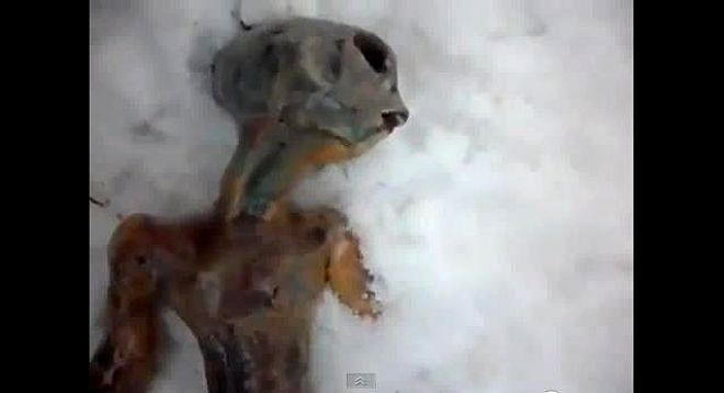 In 2011, 2 Russians found the body of a mangled alien in the cold frozen snow of the Siberian tundra. Youtube viewers speculated that the body had been left behind by a UFO crash. The body made of stale bread and covered with chicken skin.