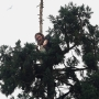 Man who spent 25 hours atop Downtown Seattle tree ordered to Western State