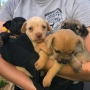 55 dogs rescued from 2 homes in southern Missouri