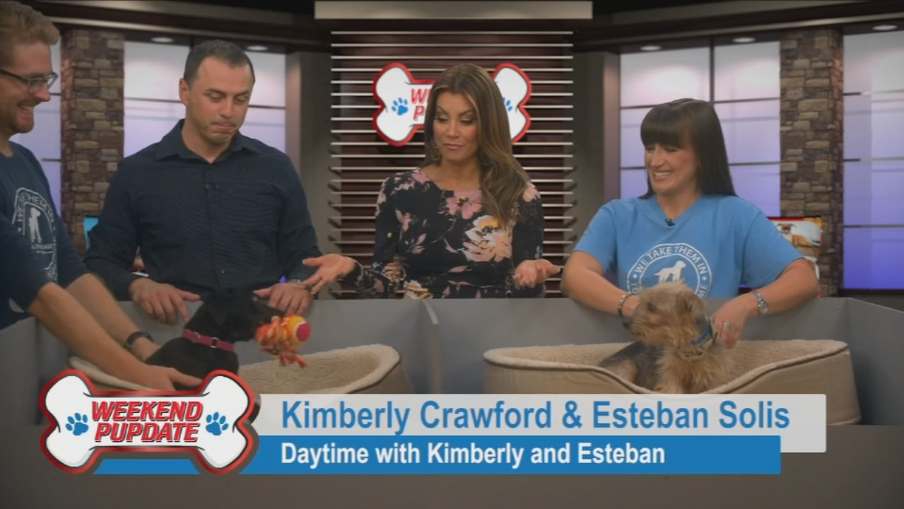 Bashful and Clive are waiting for you to take them home. (Daytime with Kimberly & Esteban)