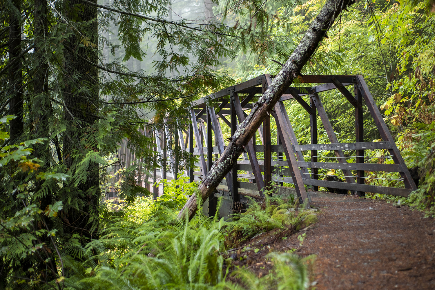 Built in 1893 to aide trains making their way through the Cascades, the Great Northern railroad grade was once considered the best engineered feat of all other transcontinental options. That same year, the railway extended operations to Seattle.{ }(Image: Rachael Jones / Seattle Refined)
