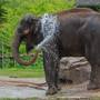 Animal rights group names OKC Zoo worst for elephants, zoo responds
