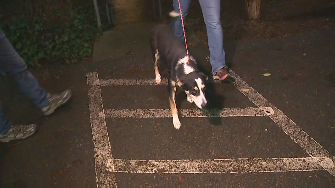 Dozens of homeless dogs and cats are getting a new beginning here in Western Washington to find their new homes, thanks to PAWS Animal Shelter in Lynnwood. About 24 dogs arrived at the shelter Wednesday night and 28 cats arrived on Tuesday. (Photo: KOMO News)