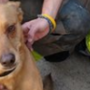 Dog rescued from Burton house fire
