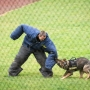 Police K9s Unleashed: 4th annual event takes place April 30 in Roseburg
