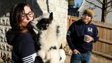 Ohio couple told again to get rid of 'support' goats