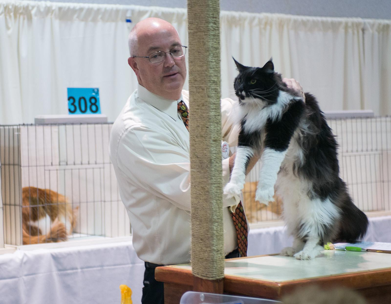 Felines representing dozens of breeds and countries are competing this weekend to take home the honors of top cat at The International Cat Show Portland. The volunteer-run show also serves as a food drive and fundraiser for the Oregon Food Bank. Admission is $6 with two cans of food or $8 without, children under 12 years old are free. (KATU photo by Tristan Fortsch on Nov. 11, 2017)
