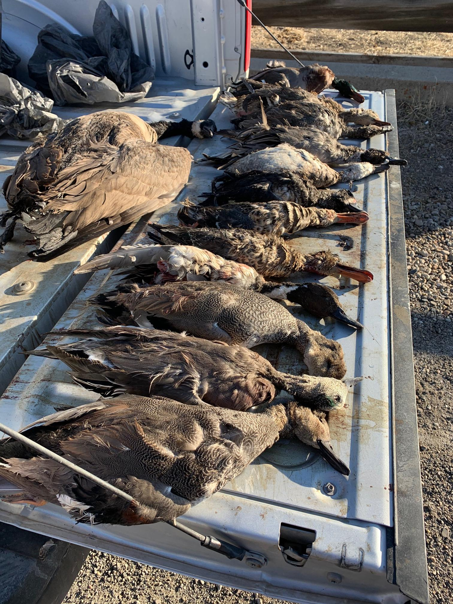 <p>More than 1,000 wildlife were illegally killed in the state of Utah during 2020, the Utah Division of Wildlife Resources reports. (Photo: DWR){&nbsp;}</p>