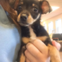 Humane society offers $5,000 reward for information on death of puppy