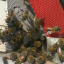 Austin firefighters respond to 14 bee-related emergency calls since May
