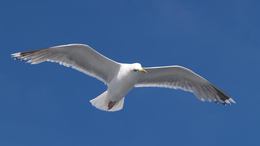 man fined 124 for kicking seagull that ate cheeseburger at nh beach
