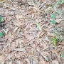Camouflaged venomous snake teaches important lesson