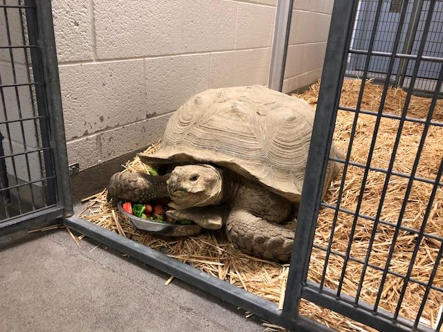 Reptile rescue guy says he didn't abandon dozens of exotic animals, he had a heart attack (Photo: Cristina Flores/ KUTV){&amp;nbsp;}<p></p>