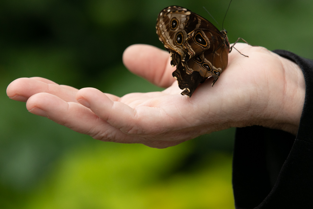 A butterfly lands on the palm of Andrea Schepmann, General Manager of Krohn Conservatory{ }/ Image: Amy Elisabeth Spasoff // Published: 3.31.19