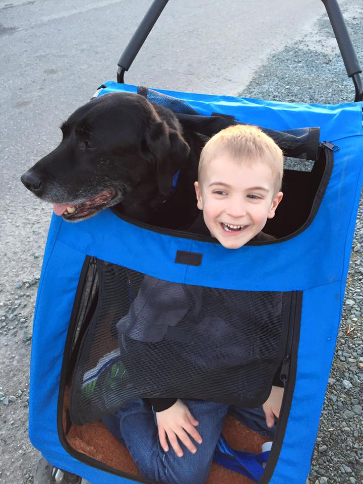 6-year-old Roman already has a strong passion to help rescued animals find forever homes. (Image: McConn family)