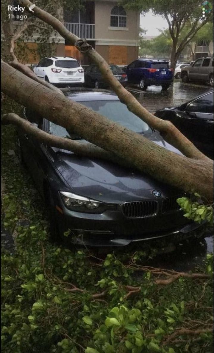 Tree fell on car in Greenacres/ Photo Credit: Ricky Sherrod