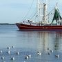 Shrimping closure issued by NOAA Fisheries Service due to white shrimp spawning population