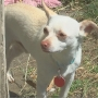 Yakima pet organization hoping Monty finds forever home