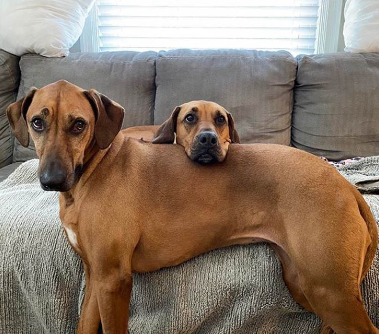 Having someone to lean on / Image courtesy of Instagram user @pennyandthetramp // Published: 4.1.20