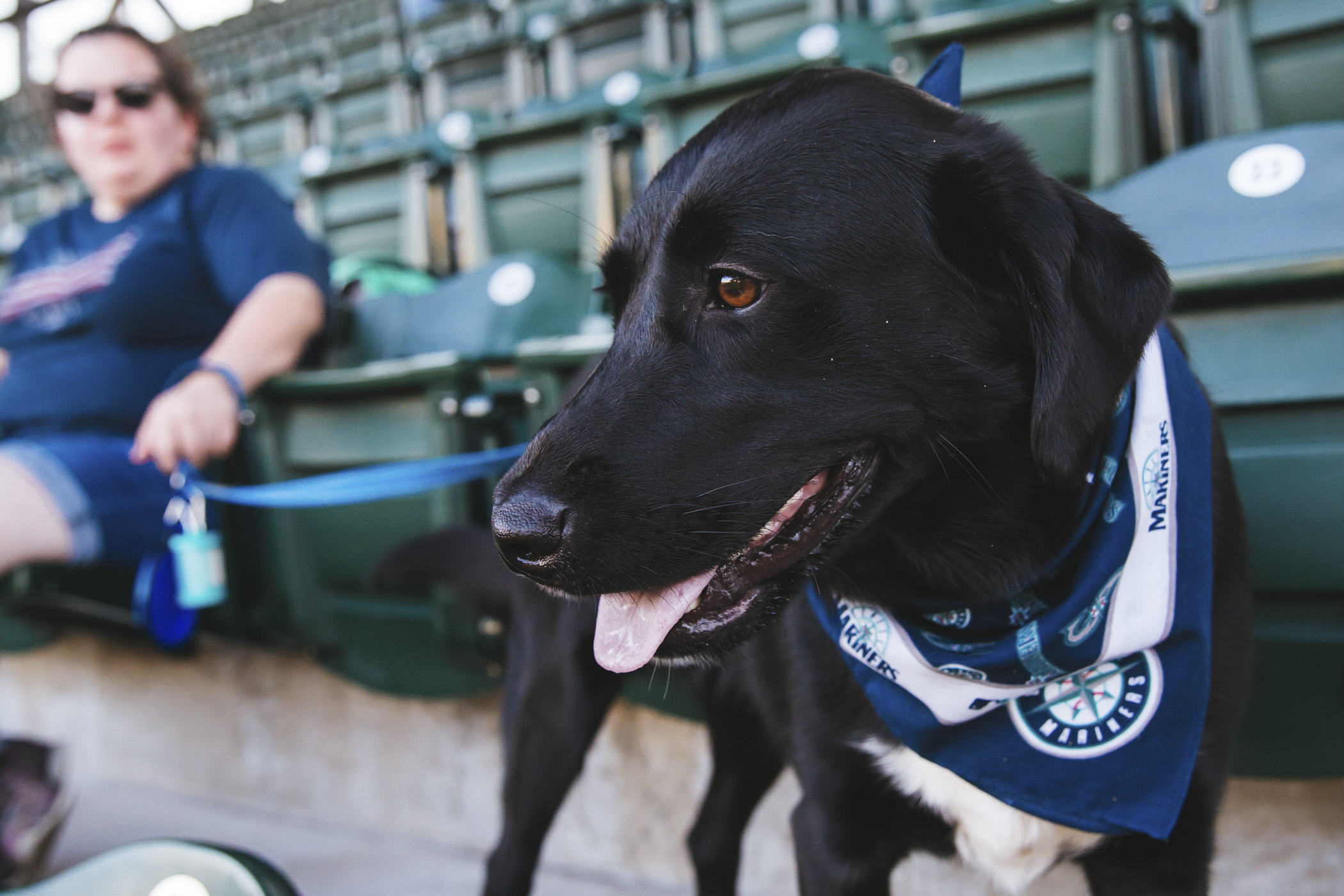 The Seattle Mariners second Bark at the Park of the season brought hundreds of dogs and their owners to the bleachers at T-Mobile Park. They barked and howled for their favorite Mariners throughout the game, and after the dogs and their owners got on the field to run the bases. There's one final Bark at the Park this season, to be held on Sept. 12, 2019. (Sunita Martini / Seattle Refined)