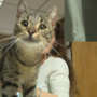Animal doctor offers $1000 reward for information on who shot pregnant cat