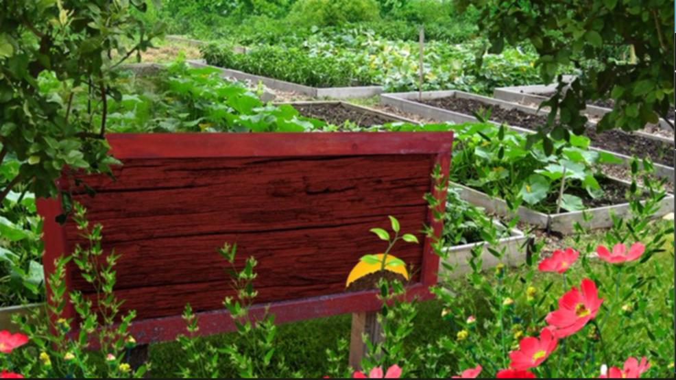 CHI Health builds Omaha community garden | KHGI