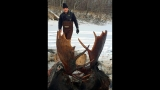 2 moose found frozen mid-fight near remote Alaska village