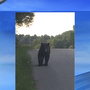 Black bear on the loose in Laurel County community, residents say