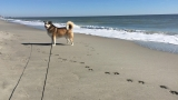 No dogs allowed: Seasonal restricted hours set to go into effect for some area beaches