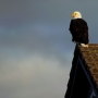 Bald eagles become familiar sight at Sparks Marina