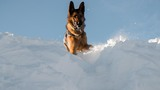Tamarack Resort avalanche dogs