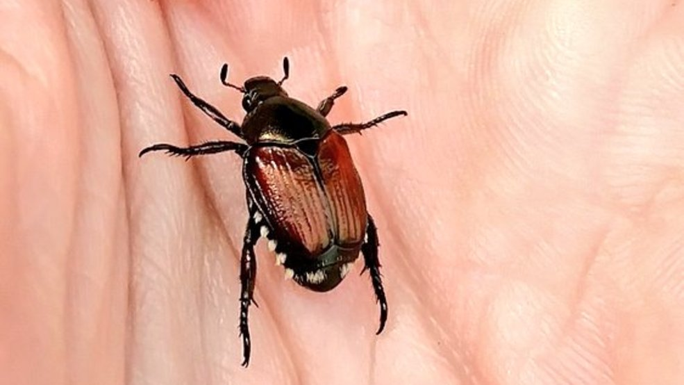 A Tiny Insect That Likes To Feed On Crops And Gardens Is The Move Now Extension Educators Are Telling You Be Lookout Elizabeth Killinger