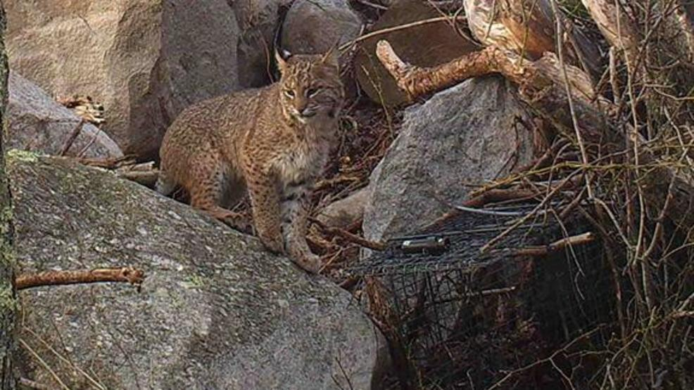 Bobcat Of Rhode Island